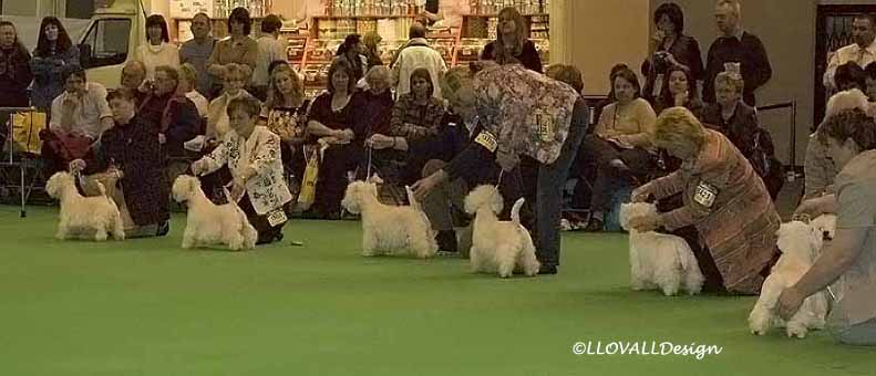 BitchLineUpCrufts07